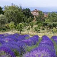 foto Azienda Agrituristica Podere Pratovecchio
